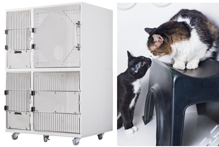 Introducing: Feline Comfort Suite