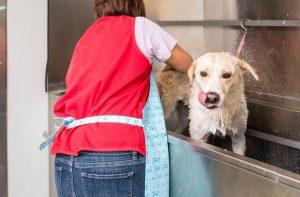 Wet dog enjoys a bath in the Elite Grooming Tub.