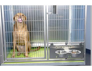 Feeding Systems for Kennel Runs